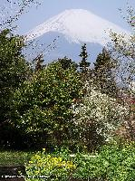 霞富士春景色