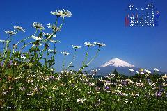 2008年5月富士山カレンダー