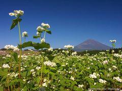 そばの花と富士